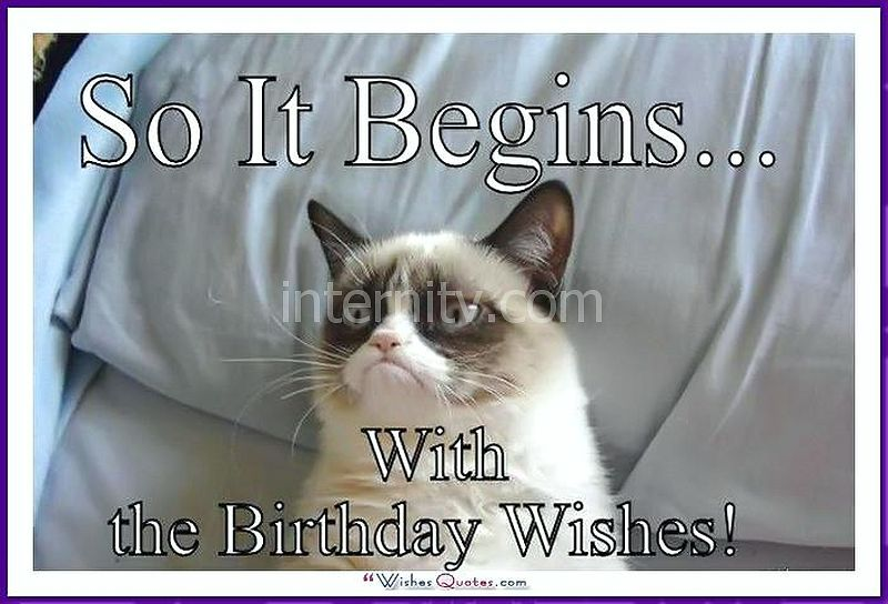 Birthday Meme with a Cat: So it Begins... With the birthday wishes